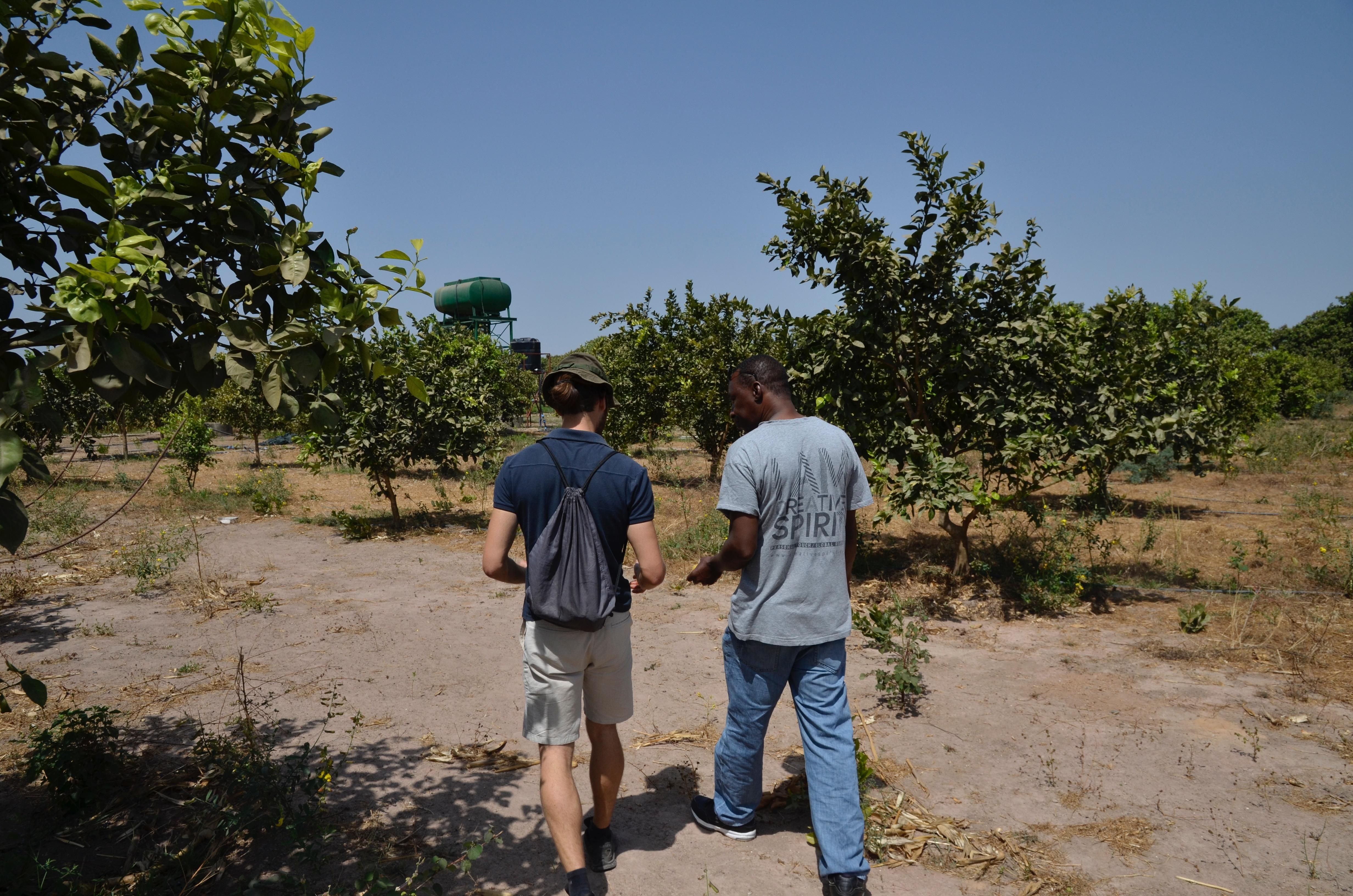 Visiting the 'Greenfarm'